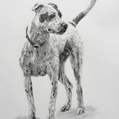 Sheaux-Rae-Pet-Dog-Memorial-Portrait-Drawing-by-John-Gordon