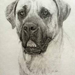 Thunder-Pet-Dog-Portrait-Drawing-by-John-Gordon