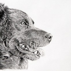 Pet Dog Memorial Portrait Drawing v3 by John Gordon