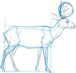 I draw a circle to approximate the dimensions of the antlers. This will keep me from making my antlers too big as I start drawing. It is easy to over do it on the parts of a drawing that capture our interest.