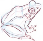 Use this framework to develop the frog, noting important anatomical structures.