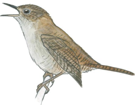Observe the way the wing is drawn. Note that the hard lines between each feather are prominent. The wing feels as is it is a separate drawing, pasted onto the side of the bird.