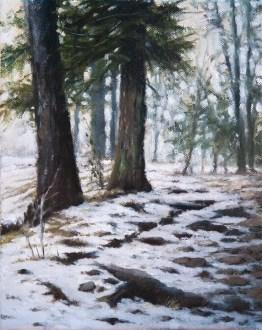 Snow among the trees. Kufri, Simla