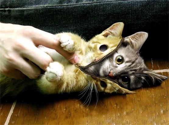 skin-a-cat