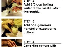 how to make  fruit fly culture