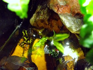 Semi-Aquatic or marginal plants provide a great source of cover for vivarium inhabitants.