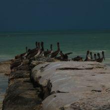 Isla Holbox Mexiko - Erfahrungsbericht 11
