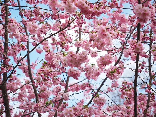 flowers-1174159_640