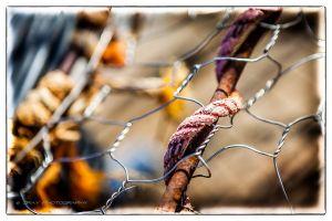 Wharf_Nets-09