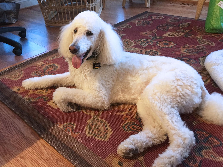 Fullsize Of Quincy The Dog