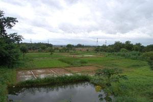 JSS farm