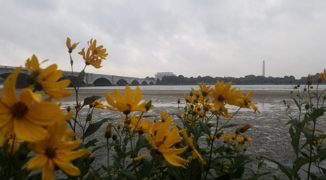 Flower View of the Monuments