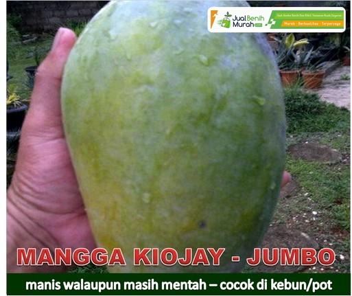 Mangga Kiojai
