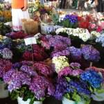 flowerstall