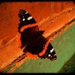 ttv+butterfly