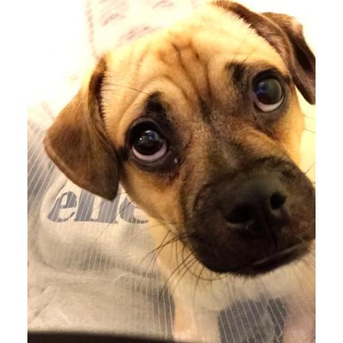 Medium Crop Of Can Dogs Get Pink Eye