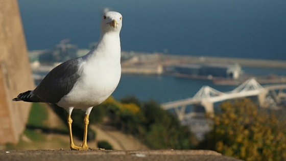 Vogel Canva