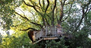 treehouse_southfrance