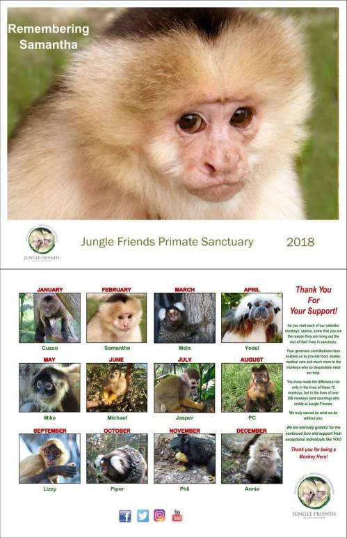 Medium Of Jungle Friends Primate Sanctuary