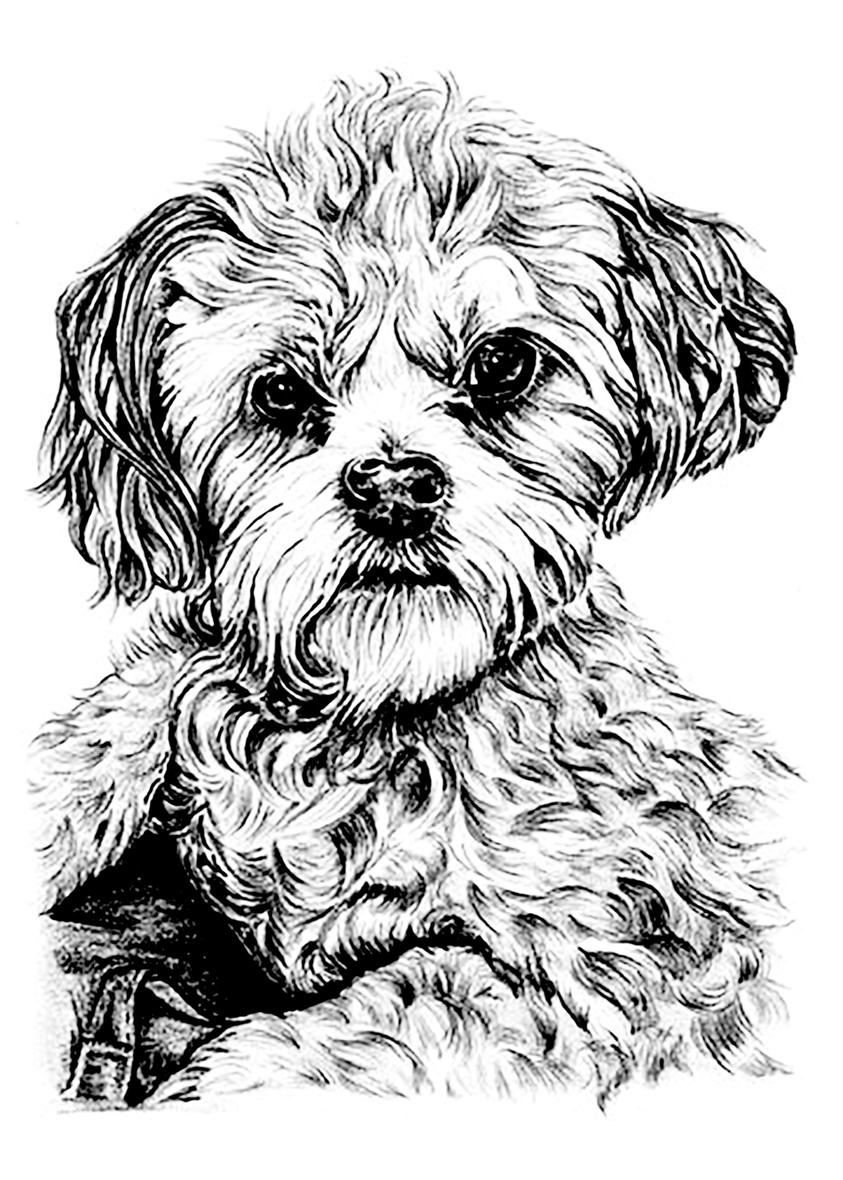 Fantastic Adults Free Dog Coloring Sheets Color Dog Dogs Adult Coloring Pages Dog Coloring Pages Adults Dog Portrait To Print bark post Dog Coloring Pages For Adults