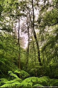 Fog Forest