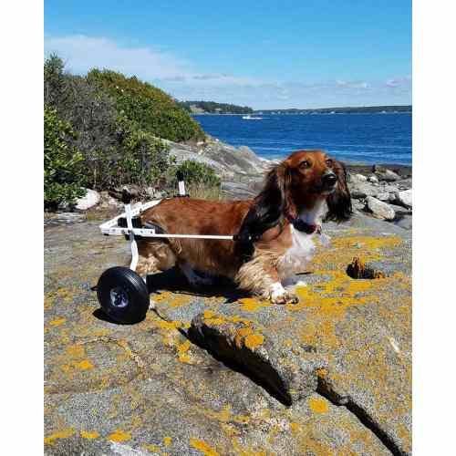 Medium Crop Of Dog Wheelchair Diy