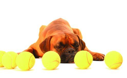 make dog training fun