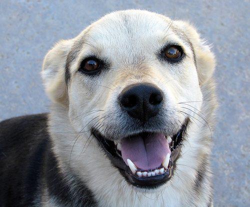 dog teeth photo