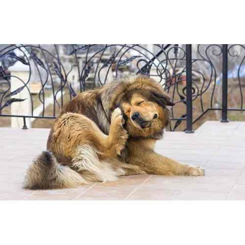 Medium Crop Of Dog Itching Benadryl