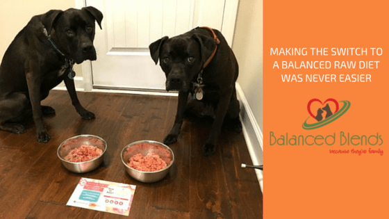 K9sOverCoffee   Making The Switch To A Balanced Raw Diet Was Never Easier. Balanced Blends - Because They're Family.