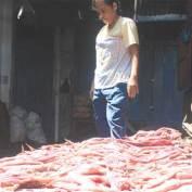 Harga Ikan Cumi-cumi Terjun Bebas