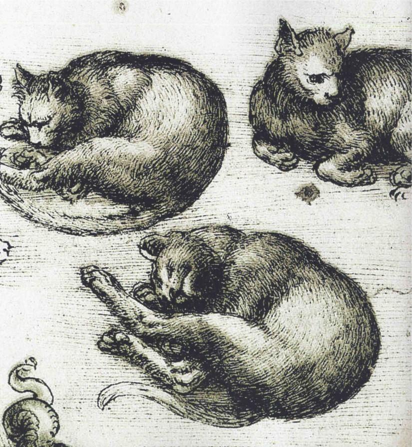 Leonardo-da-Vinci-studio-di-gatti