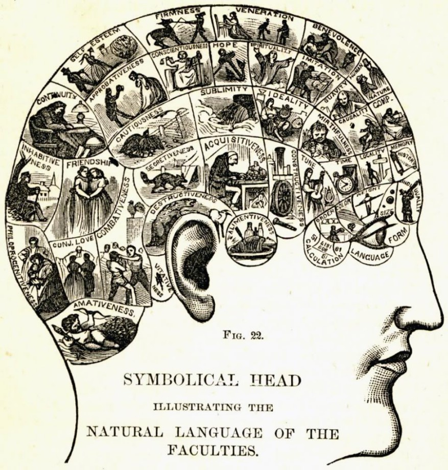 phrenology_chart by georgiana garden