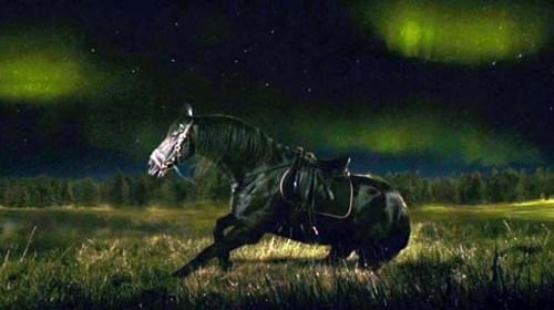 melancholia lars von trier horse
