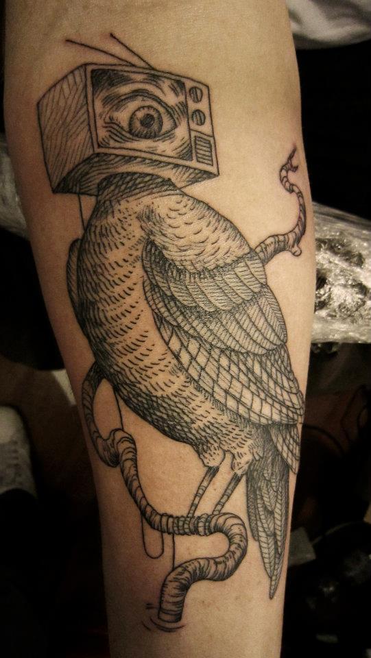Otto D'Ambra uccello televisivo