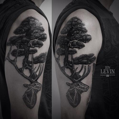 ien levin deer head forest