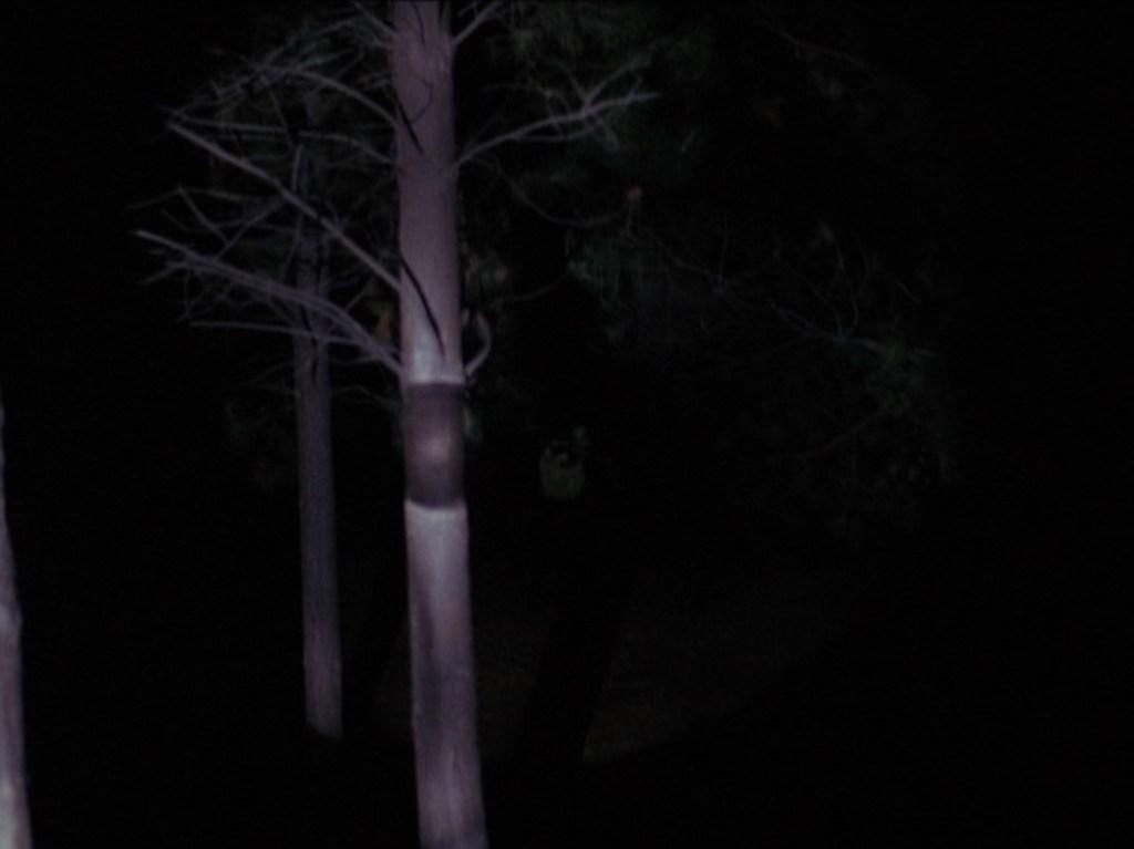 foresta, tpep2_055, via intwinpeaks.com