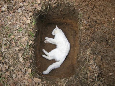 gattino bianco morto, via tumblr
