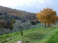 blog_olivi
