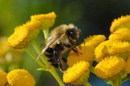Muğla'da arı ölümleri arttı