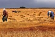 Çanlar tarım için çalıyor