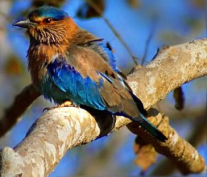 Coorg – A Haven for Bird Watchers