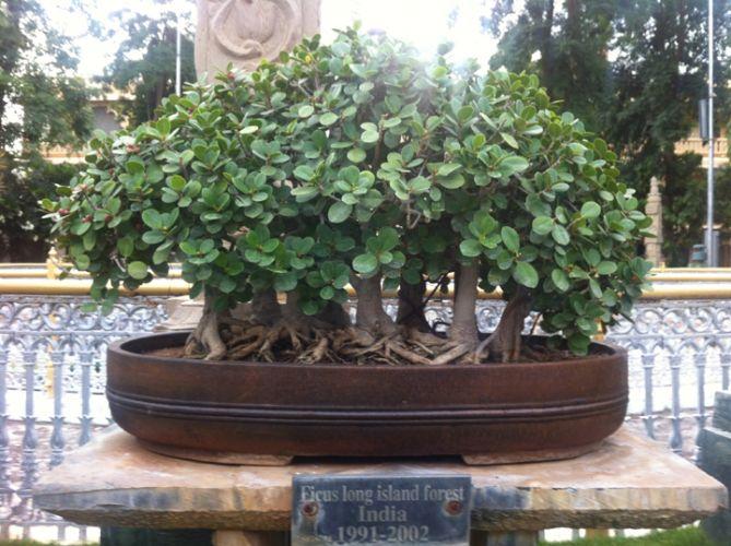 Kishkindha oolika bonsai garden, Mysore