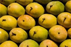 Mango Mela in Lalbagh