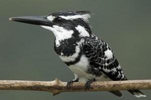 Shettihalli Wildlife Sanctuary, Shimoga