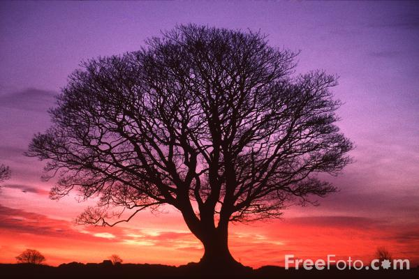 tree-15_19_1-Tree-Sunrise-Northumberland_web
