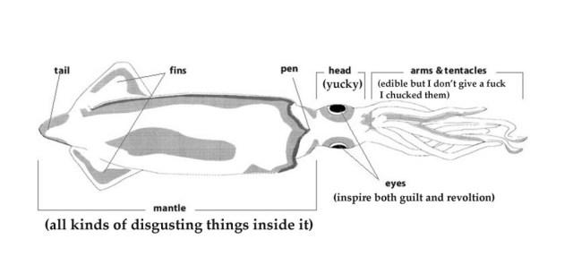 squid diagram