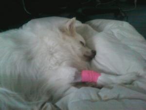 kira, bandage