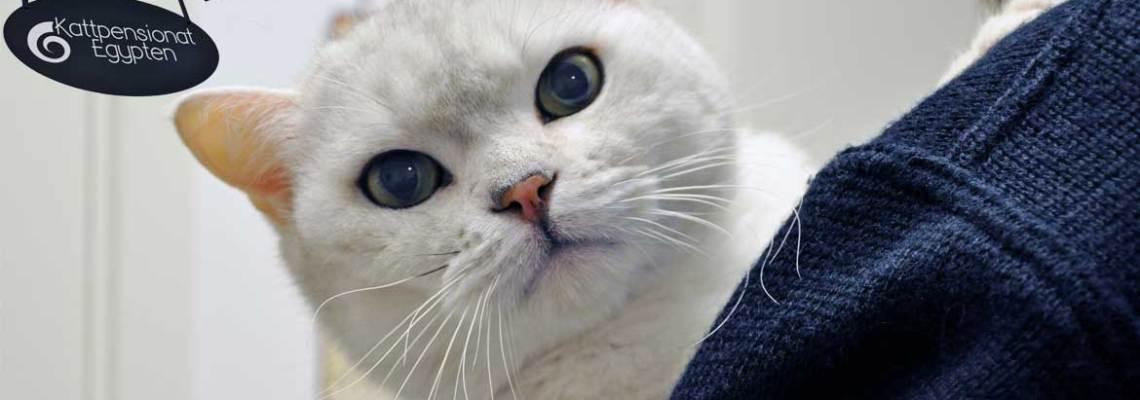 Kelstunder & aktivering för din katt