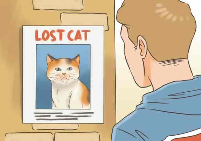 670px-Find-a-Lost-Cat-Step-17-Version-2